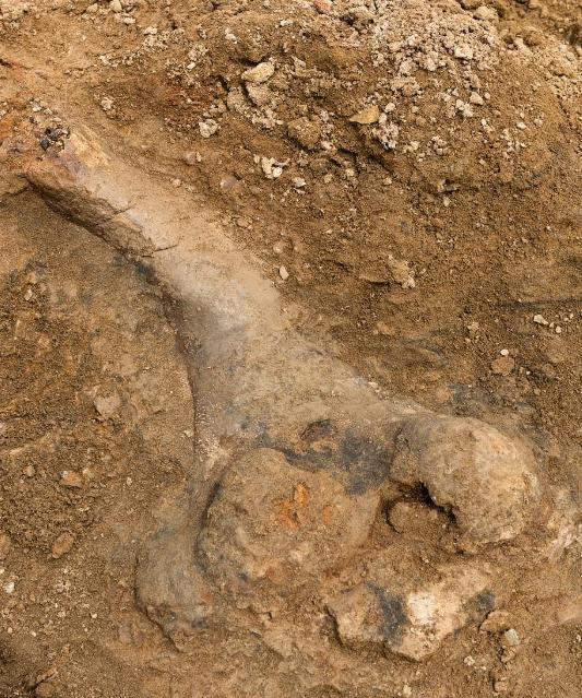 العظام المتحجرة