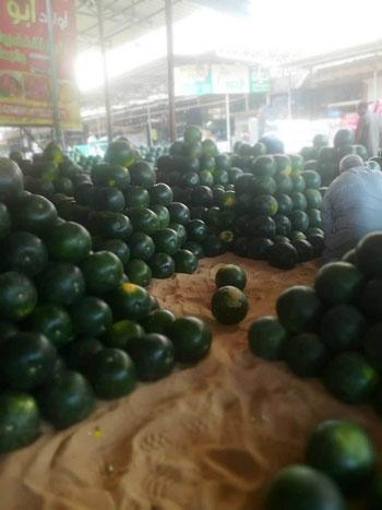 البطيخ.. الواحدة بـ5 جنيهات بالغيطان و25 للمستهلك (7)
