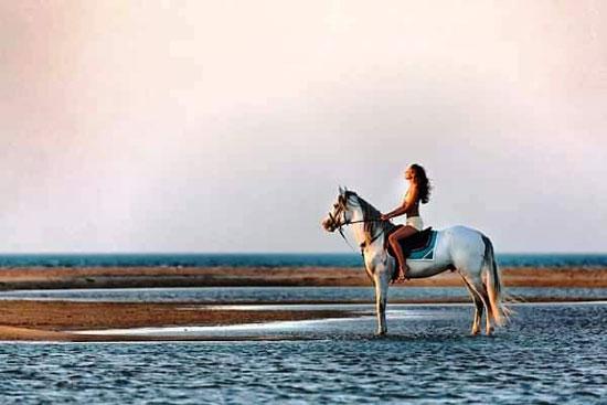 السحر والخيال يتحدان على شواطئ البحر الأحمر (12)