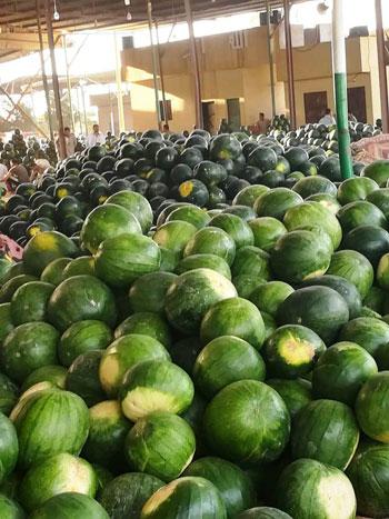 البطيخ.. الواحدة بـ5 جنيهات بالغيطان و25 للمستهلك (4)