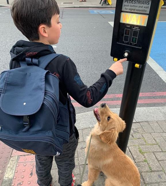 الكلب مع مالكه