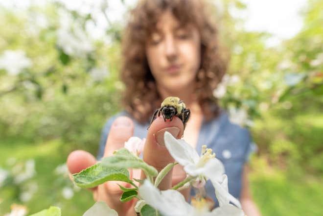 النحل 2