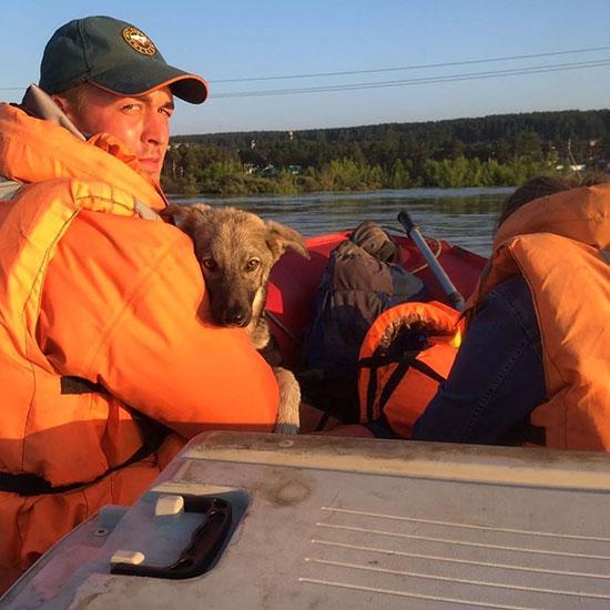 انقاذ كلب جراء الفيضانات