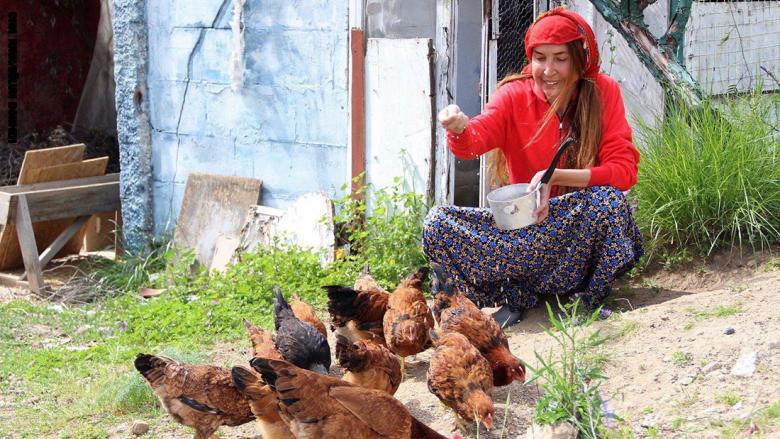 بيلون دهمن تطعم الدجاج