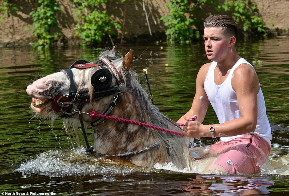أكبر معرض للخيول فى بريطانيا (2)