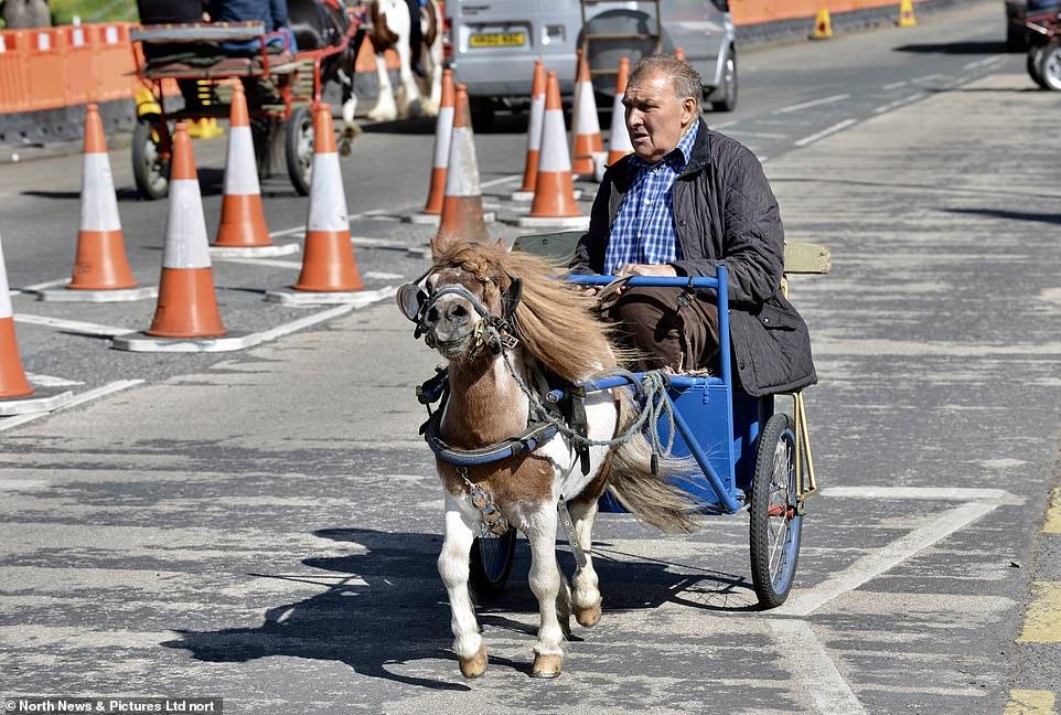 أكبر معرض للخيول فى بريطانيا (10)
