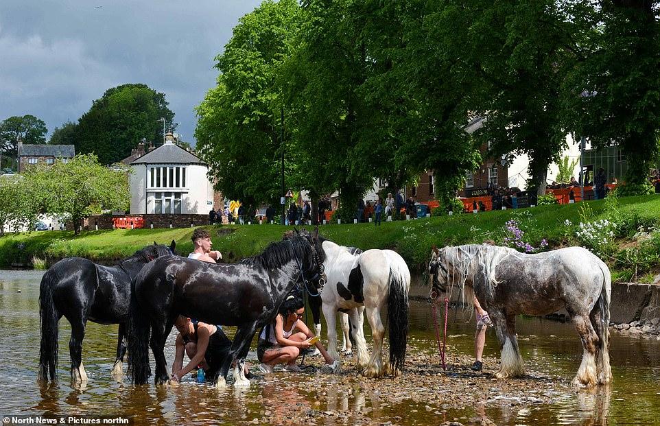 أكبر معرض للخيول فى بريطانيا (14)