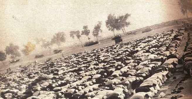 مظاهر الإحتفال بالعيد (2)