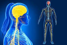 الجهاز العصبى
