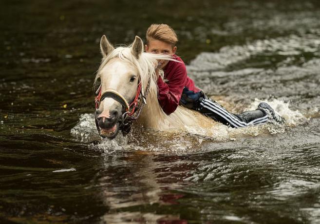 الخيول تغمرها المياه