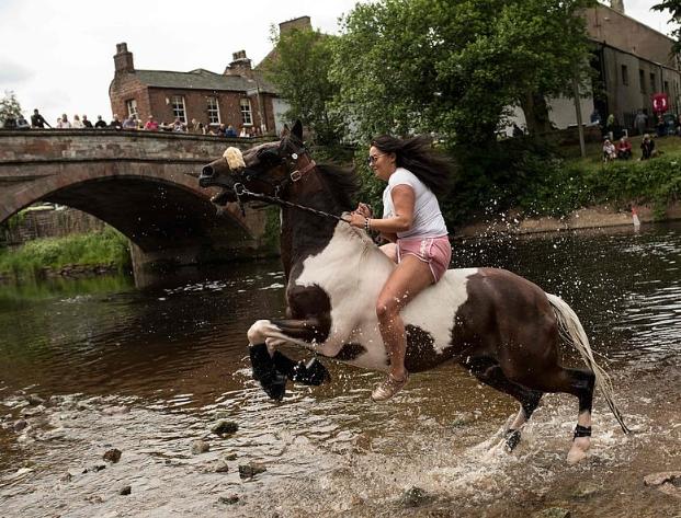معرض للخيول