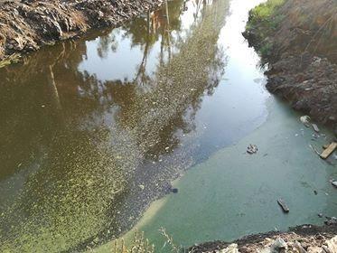 مياه الصرف بترعة أم دلال