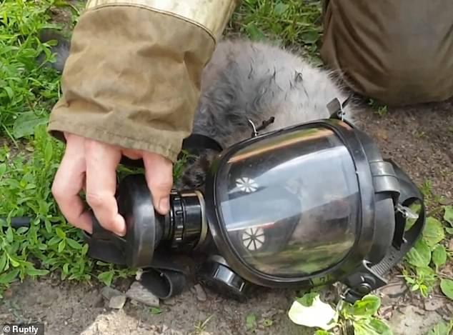 انقاذ قط بوضع جهاز الأكسجين من حريق بروسيا  (4)