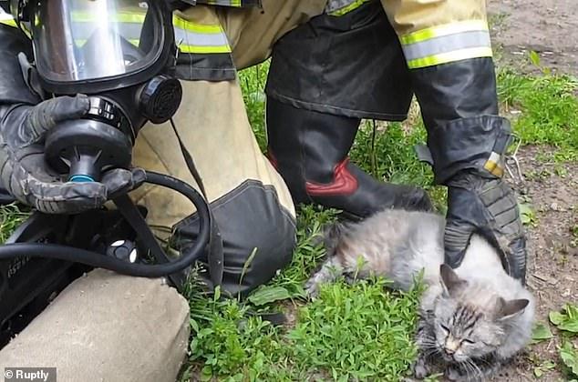 انقاذ قط بوضع جهاز الأكسجين من حريق بروسيا  (1)