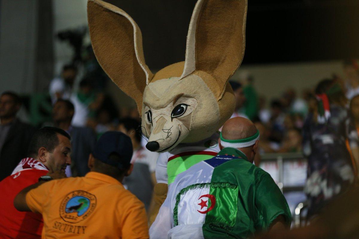 مشجع منتخب الجزائر