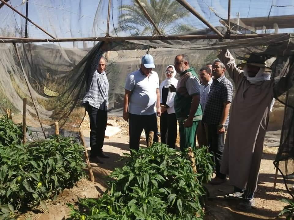 الصوب الزراعية بالوادى الجديد (3)