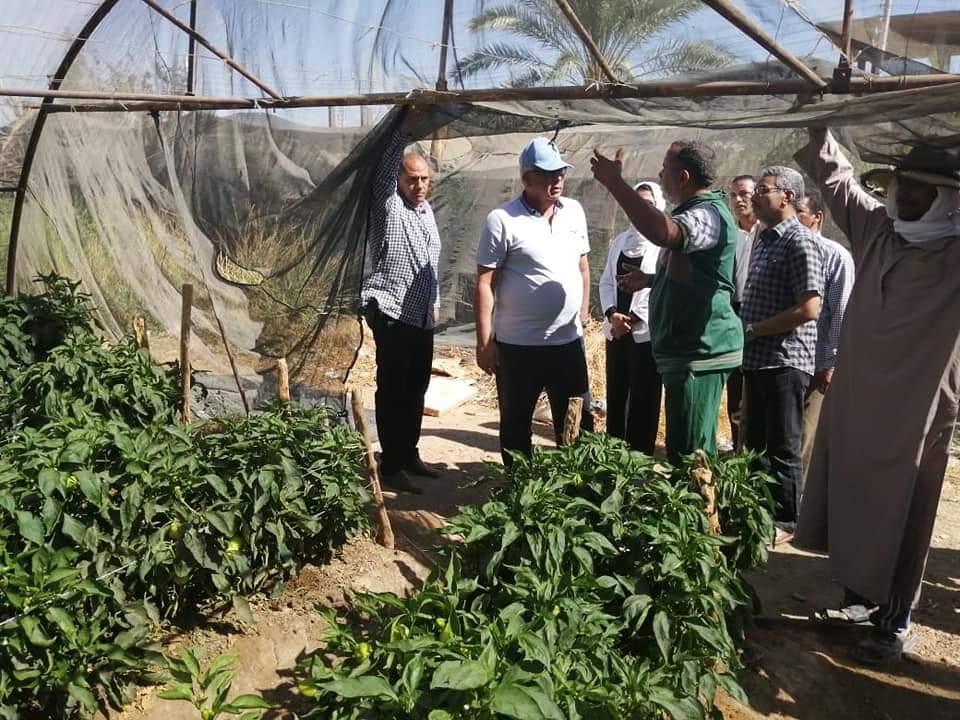 الصوب الزراعية بالوادى الجديد (2)