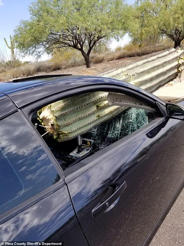سائق ينجو بأعجوبة بعد سقوط صباره عملاقة داخل سيارته (1)