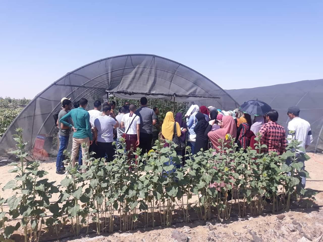 الصوب الزراعية بالوادى الجديد (1)
