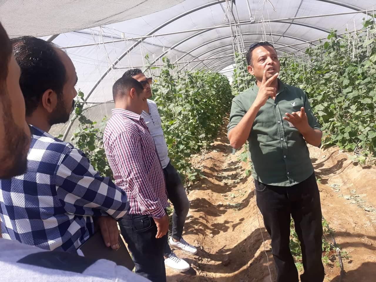 الصوب الزراعية بالوادى الجديد (4)