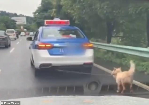 كلب يُجر بحبل فى سيارة تعاطفت معه الصينيين  (1)