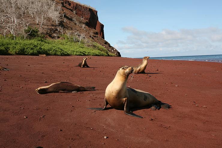 شاطئ الرمال الحمراء
