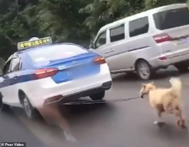 كلب يُجر بحبل فى سيارة تعاطفت معه الصينيين  (4)