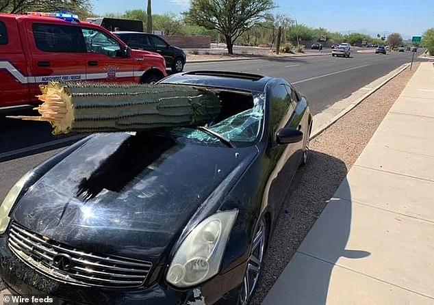 سائق ينجو بأعجوبة بعد سقوط صباره عملاقة داخل سيارته (3)