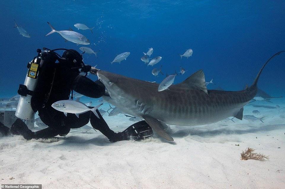بدلة غطس مقاومة لأسماك القرش (4)