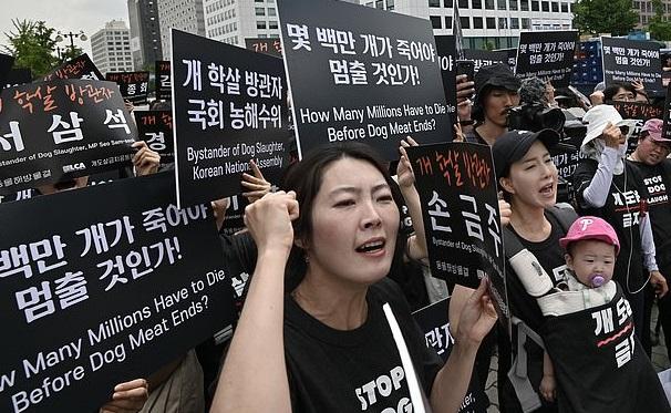 مظاهرات فى كرويا الجنوبية ضد تناول لحوم الكلاب (2)