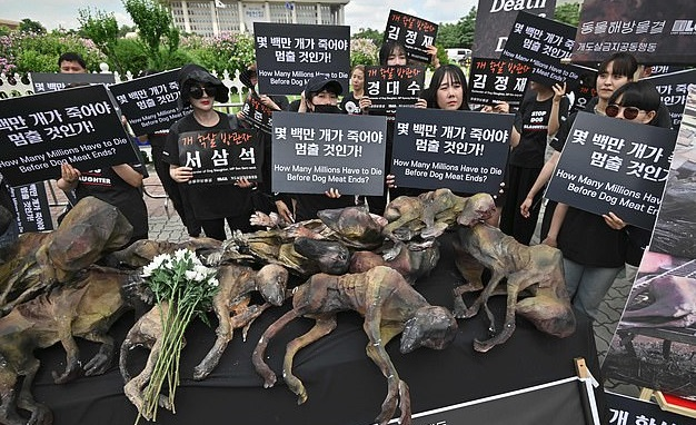 مظاهرات فى كرويا الجنوبية ضد تناول لحوم الكلاب (3)