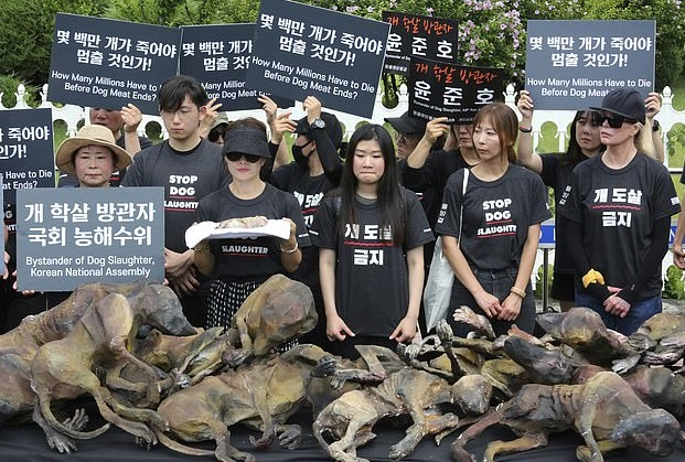 مظاهرات فى كرويا الجنوبية ضد تناول لحوم الكلاب (5)