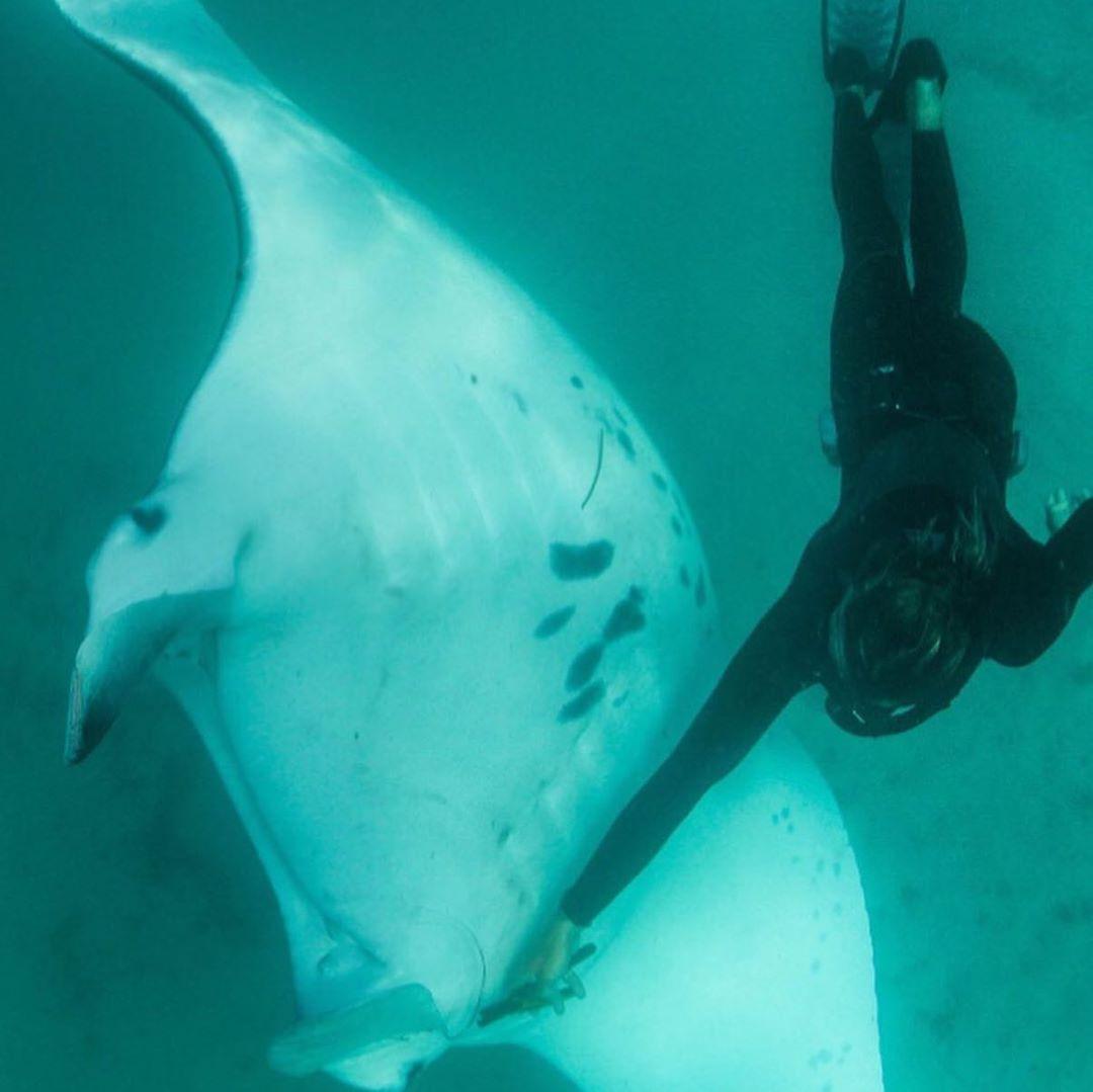 سمكة تقترب من غواص لطلب إزالة خطافات عينتها (2)