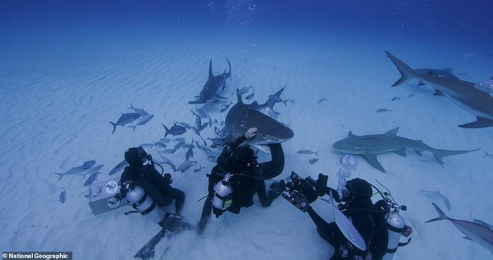 بدلة غطس مقاومة لأسماك القرش (1)