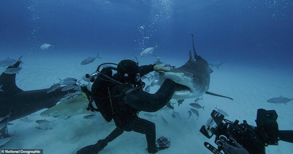 بدلة غطس مقاومة لأسماك القرش (5)
