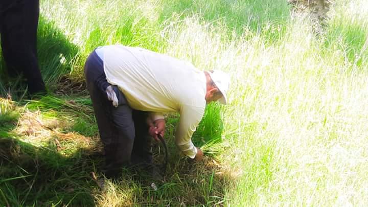 رفع كفاءة حدائق شجرة الدر والمجزر (3)