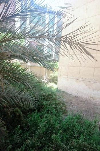 أزمة مستشفى بشبيش بالمحلة (4)