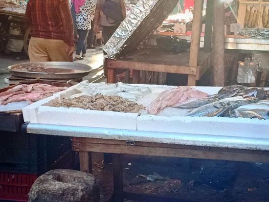 الأسماك فى أسواق الإسكندرية (3)
