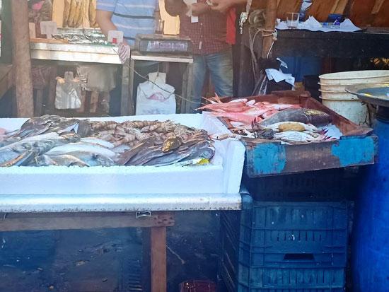 الأسماك فى أسواق الإسكندرية (6)
