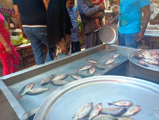 الأسماك فى أسواق الإسكندرية (2)