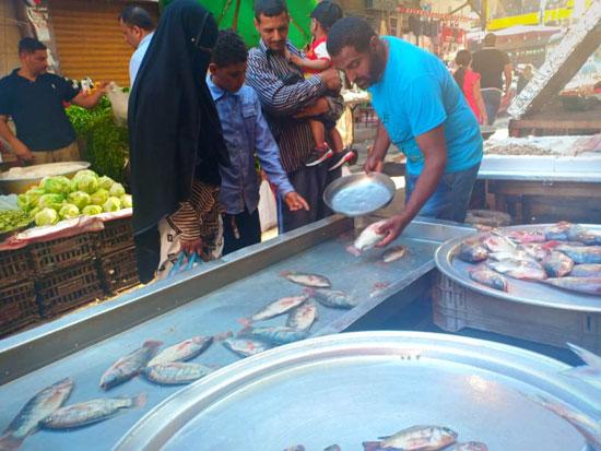 الأسماك فى أسواق الإسكندرية (1)