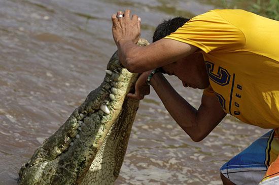 تماسيح بنهر تاركوليس فى كوستاريكا (2)
