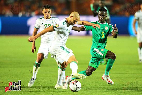 الجزائر والسنغال (1)