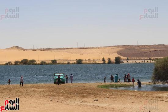 السباحة-فى-النيل-والترع-خلال-فصل-الصيف-بأسوان-(7)