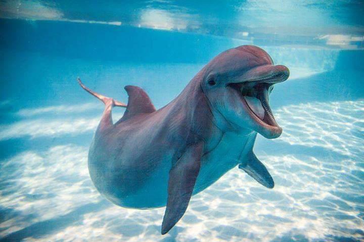 دلافين البحر الاحمر  (3)