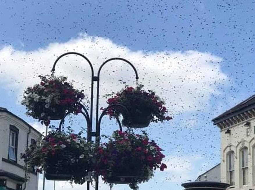 أسراب النحل تثير الرعب فى البريطانيين