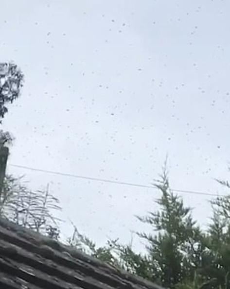 أسراب النحل