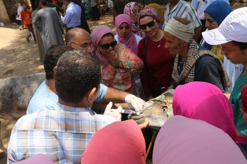 جامعة أسيوط تطلق قافلة بيطرية مجانية لقرية شقلقيل (9)