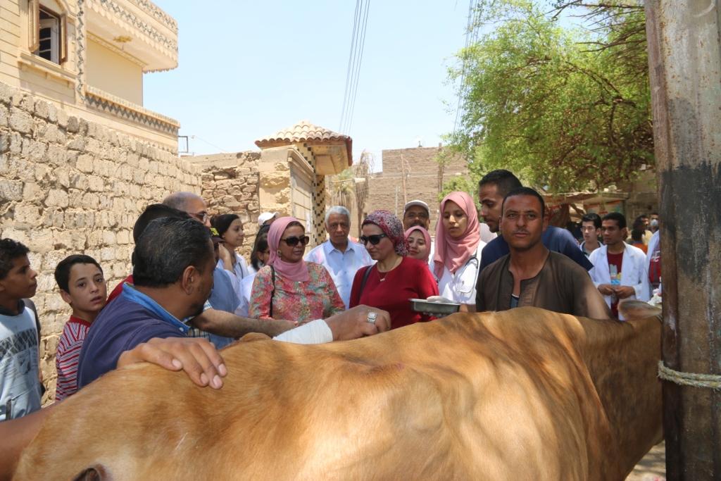 جامعة أسيوط تطلق قافلة بيطرية مجانية لقرية شقلقيل (11)