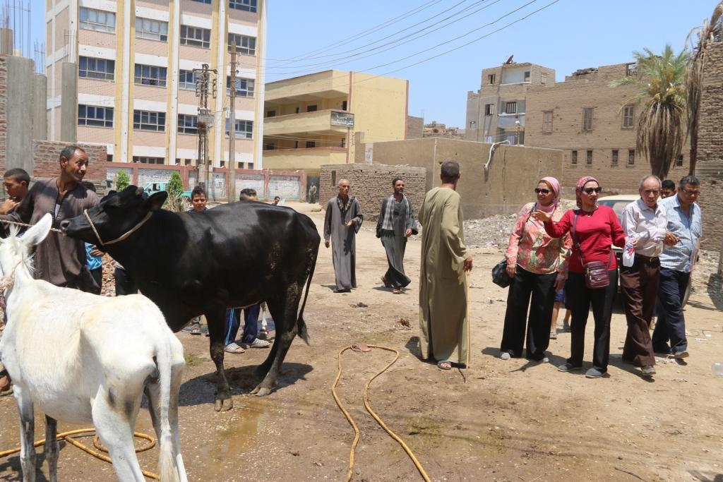 جامعة أسيوط تطلق قافلة بيطرية مجانية لقرية شقلقيل (7)